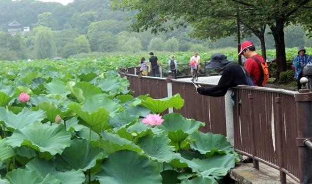 Hồ Shinobazu