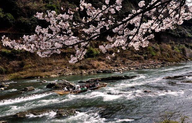 hoa-anh-đào_dọc-sông_Hozugawa