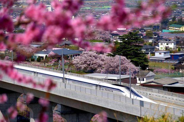 hoa-anh-dao-nhat-ban-shinkansen