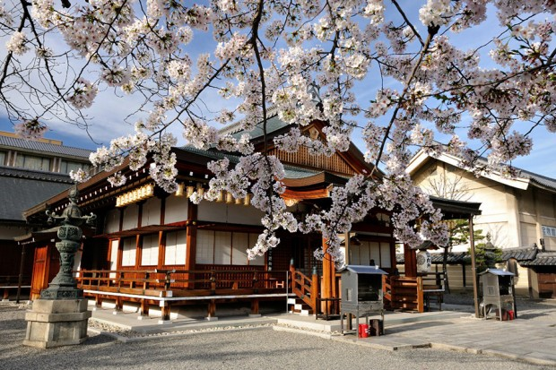 hoa-anh-dao_toji_kyoto_nhat-ban5