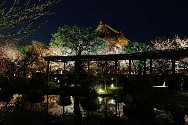 hoa-anh-dao_ve-dem_toji_kyoto_nhat-ban6