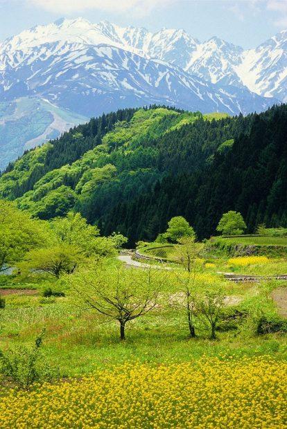 Đầu mùa xuân ở Nhật Bản những ngọn núi phủ tuyết vẫn nhìn thấy được