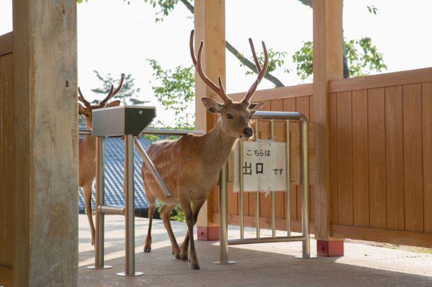 Thứ tự vào cổng soát vé Wakakusa