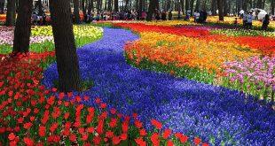 Du lịch Nhật bản ngắm hoa - một góc công viên