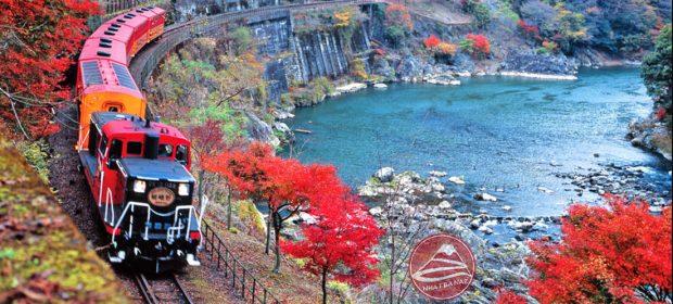 Chuyến tàu Sagano lãng mạn Nhật bản mùa lá đỏ