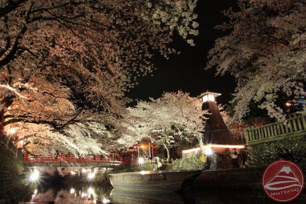 nhat-ban_yozakura5