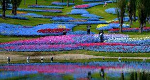 Cảnh đẹp công viên ở Nhật bản
