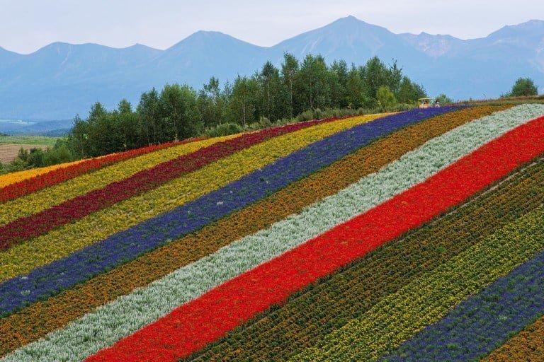 Vườn hoa Panoramic, Shikisai-no-Oka, Biei ở Hokkaido