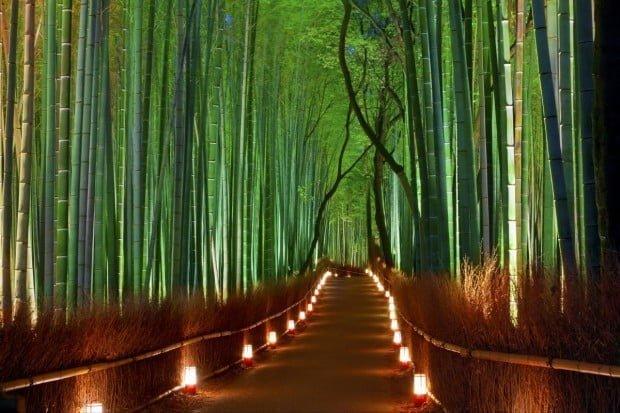 sagano bamboo forest arashiyama