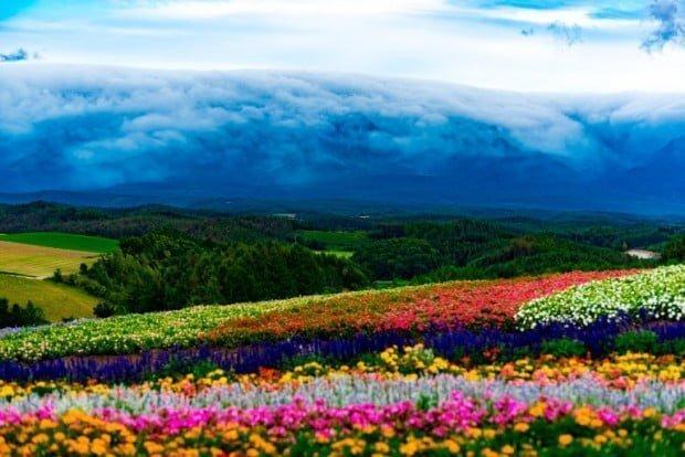 Có rất nhiều hoa trong mùa thu quá! Bức ảnh được chụp vào tháng Chín