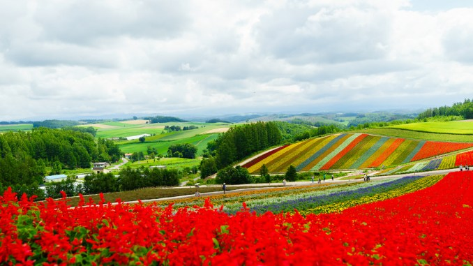 shikisai_no_oka_flower_season_biei_hokkaido_japan