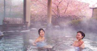 Ngắm hoa anh đào sớm ở Nhật Bản vào dịp tết Nguyên Đán