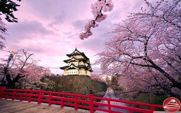 Cung điện Hoàng Gia Nhật chìm trong sắc hồng Hoa Anh Đào