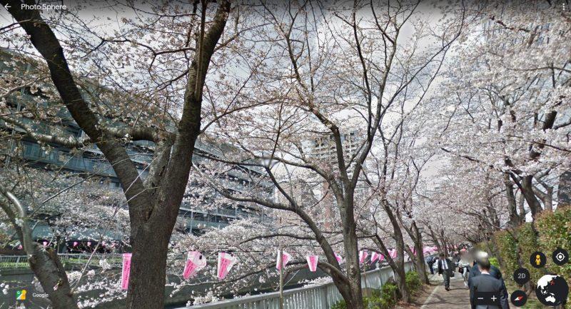 Hoa Anh Đào ở Meguro River