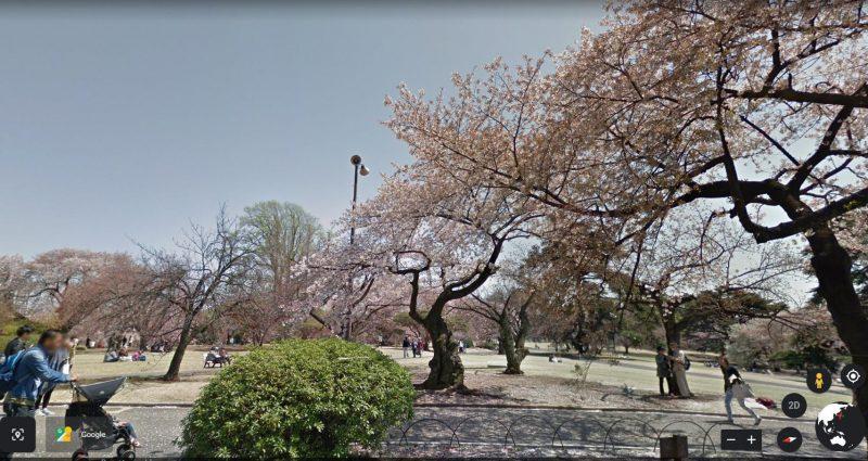 Ngắm hoa Anh Đào từ xa tại Shinjuku Gyoen