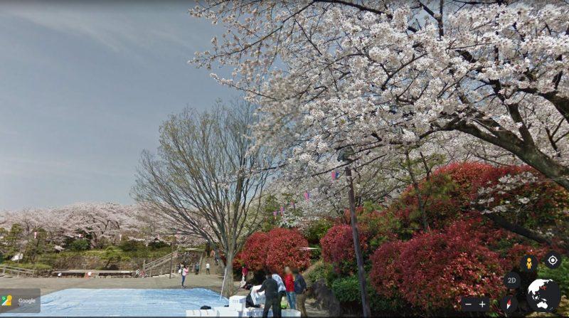 Hoa Anh Đào trong công viên Công viên Asukayama