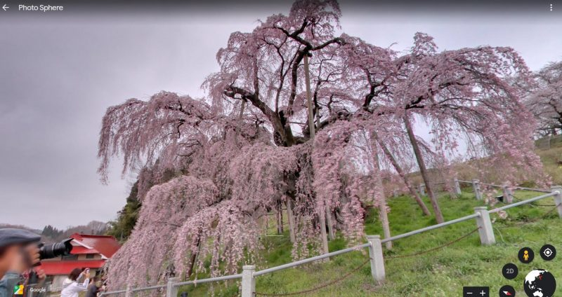 Ngắm hoa anh đào từ xa tại Miharu Takizakura